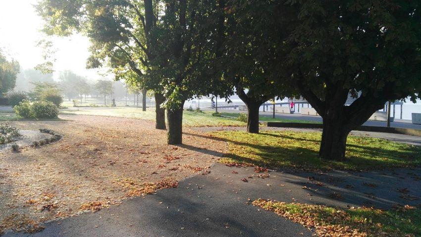 Original Seeufer Verbaut Park Morning Morning Light Light Tree Landscape