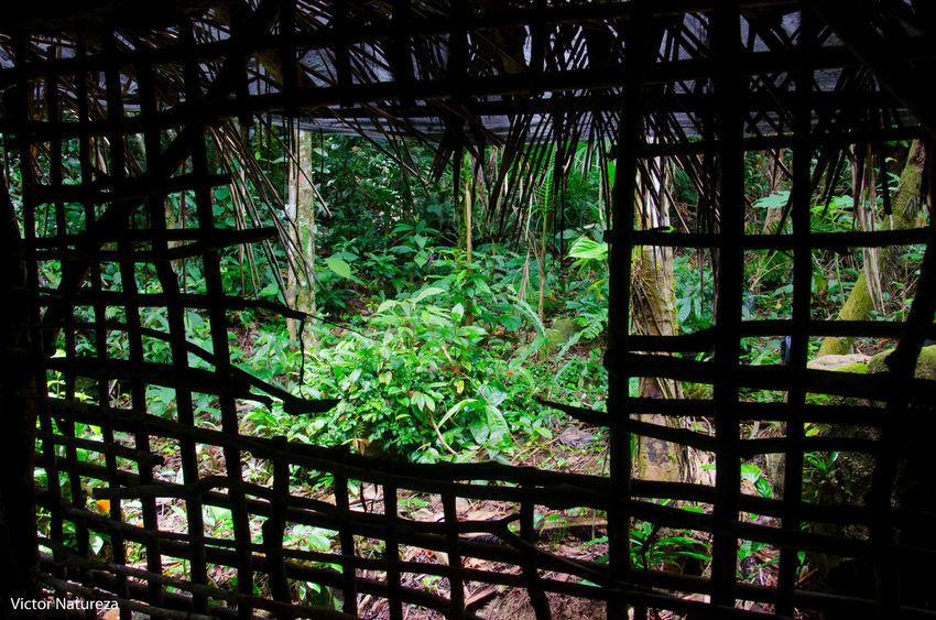 Fotografiaautoral Photoart Artefotografia Brazil RJ Brasil Vitaonatureza Victornatureza Documentaryphotography Fotodocumental Documentary Travel Destinations Nature Paraty