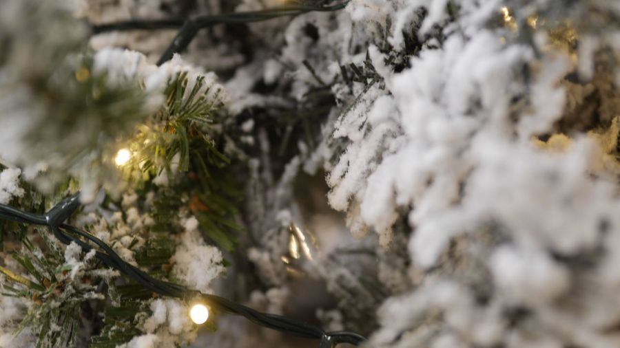 EyeEm Selects Plant Tree Snow Branch Cold Temperature Winter Focus On Foreground Beauty In Nature Close-up Illuminated White Color Selective Focus Christmas Day Celebration Pine Tree