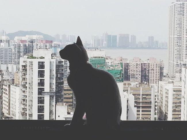 Cat Meow Shadow Window Macau