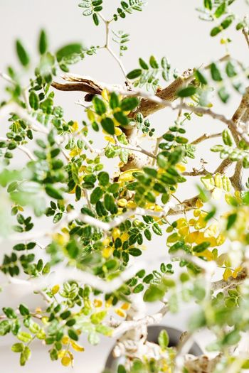 Plant Growth Green Color No People Nature Tree Beauty In Nature Tranquility Animal Themes Freshness Outdoors Close-up Selective Focus Animal Wildlife Low Angle View Plant Part Day Sunlight Fragility Leaf