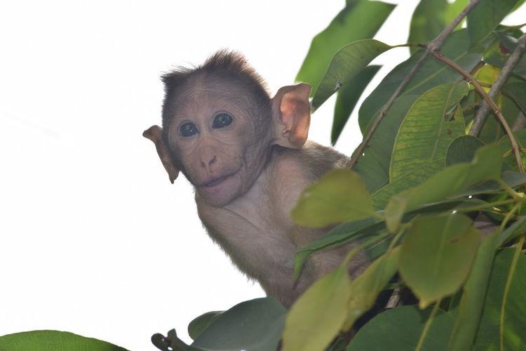 Monkey Kid -