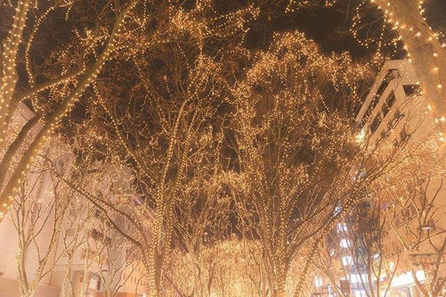 光のページェント 仙台 風景 夜景 イルミネーション