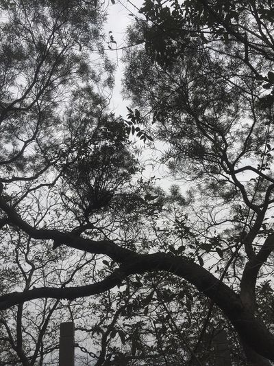 Tree Branch Low Angle View Nature Growth Outdoors Day No People Sky Beauty In Nature Tree Trunk Forest Old Pic  Vscocam Black And White