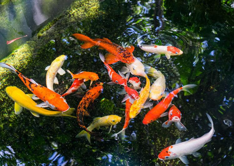 Fish swimming in a sea
