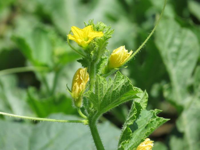 Flower Leaf