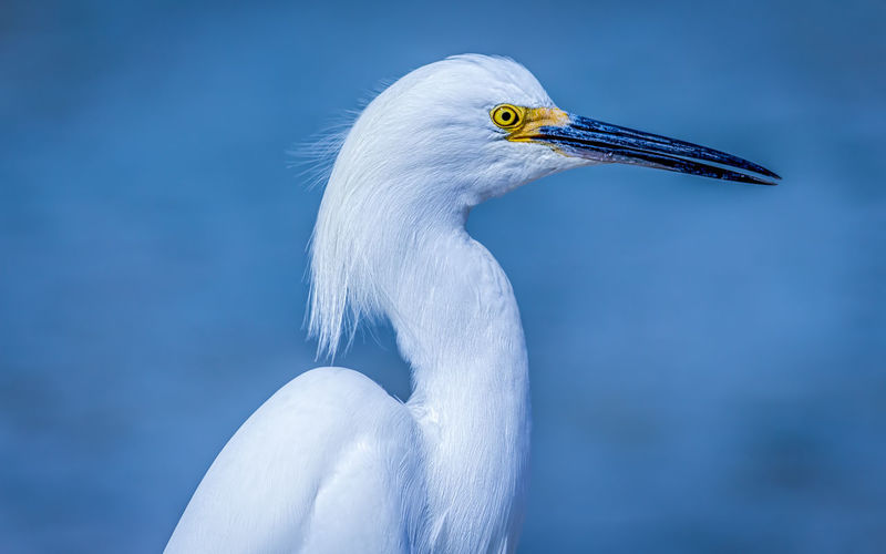Close-up of bird against water