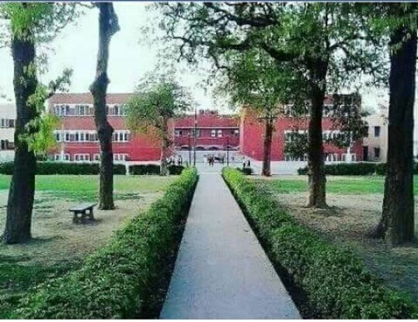 Jamia Millia Islamia University My School~~ Childhooddays Clouds, Nature, My View Greenyday Delhi