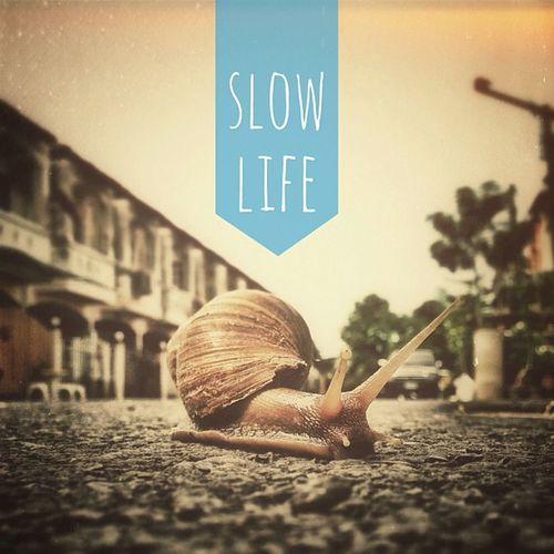 Live...Slow Life.... Thaiig Thailand Igth Instagood instamood igs_photos ig_bestever allshots snail slowlife greatest_shot hotzshot jj keepwalking life