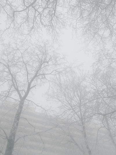 Nature Bare Tree Sky Tree Cold Temperature Poland HuaweiP9 Www.tomaszkucharski.com.pl Blackandwhite Ice Winter Foog Wroclaw
