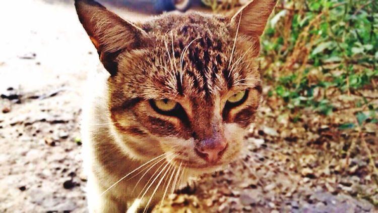 Prise par moi Cat♡