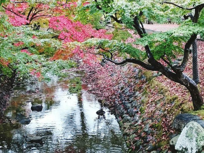Rainy Day 東大寺 今日も雨降り のんびり ぐだぐだ ゆらゆら 休日