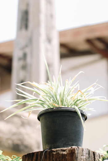 Plant Focus On Foreground Nature Close-up Growth No People Potted Plant Day Green Color Outdoors Leaf Plant Part Architecture Wood - Material Container Built Structure Sunlight Water Freshness Building Exterior Houseplant Small Flower Pot