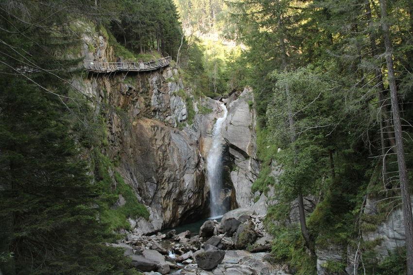 Tree Water Forest Waterfall Flowing Water Splashing Power In Nature