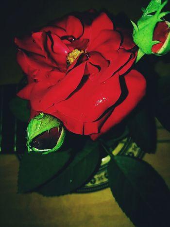 #rosa