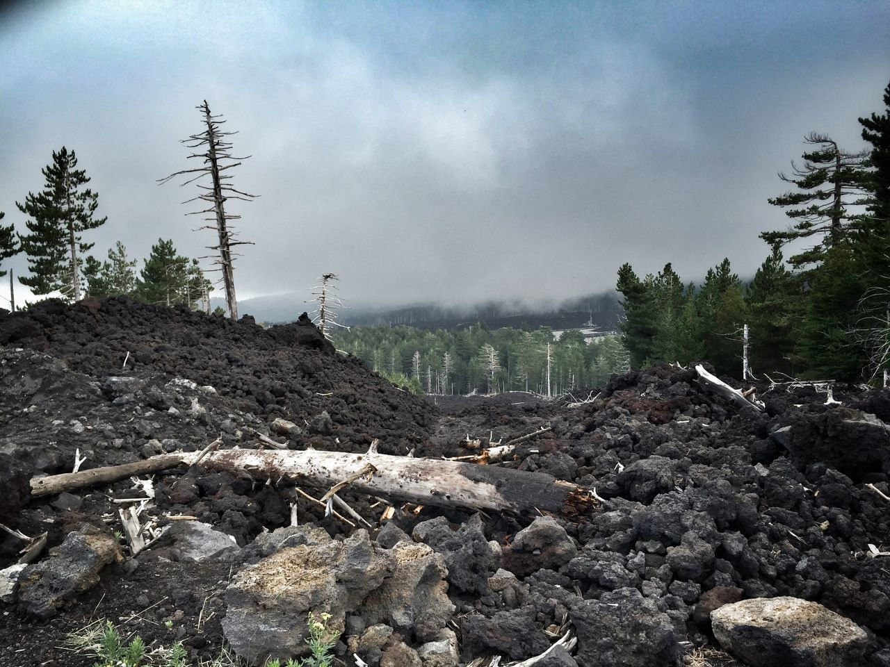 Dead Tree Logs On Rock Heap Against Cloudy Sky
