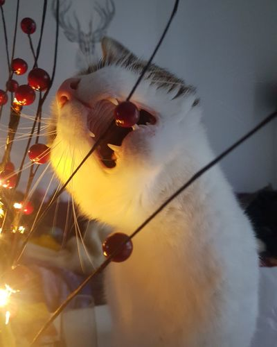 Low angle view of christmas hanging against sky at night