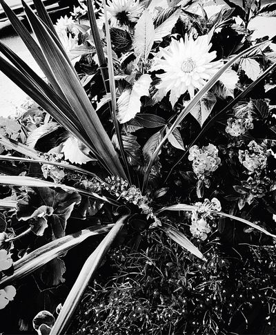 New perspective on flowers EyeEm Ready   EyeEmNewHere Newperspective Blackandwhite Flower Growth Plant Leaf Nature Freshness Fragility Petal Flower Head No People Outdoors Day Close-up Beauty In Nature