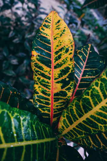 Green Green Color Mexico Nature Plant Plants Trees Background Background Texture Backgrounds Beauty In Nature Close Up Day Green Color Greenery Growth Leaf Nature No People Outdoors Plant Plant Part Tropical