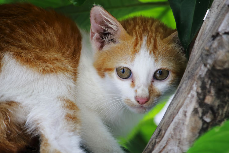 Animal Themes Cat Feline Animal Domestic Cat Domestic Mammal Pets One Animal Domestic Animals Vertebrate Portrait Looking At Camera No People Whisker Focus On Foreground Close-up Day Plant Animal Body Part Animal Head  Animal Eye Ginger Cat