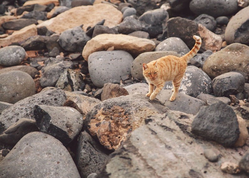 Canary Islands Lanzarote SPAIN Travel Volcanoes Animal Animal Themes Animal Wildlife Animals In The Wild Cat Day Domestic Animals Feline Geological Formation Island Landscape Mammal Nature No People One Animal Pebble Pets Rock Rock - Object Rodent Solid Stone Stone - Object Vertebrate Volcanic  Volcano Whisker