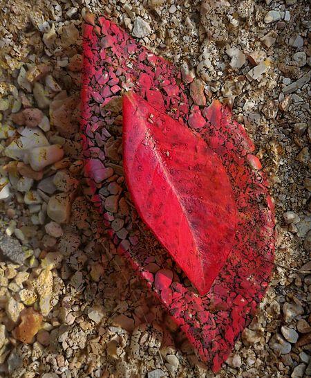 Foglia Leaf Rossofuoco Firered Piccolabellezza Littlebeauty Marvellous Autunno  Autumn Autumn Leaves Fall Rossogrigio Redgrey EyeEmNewHere