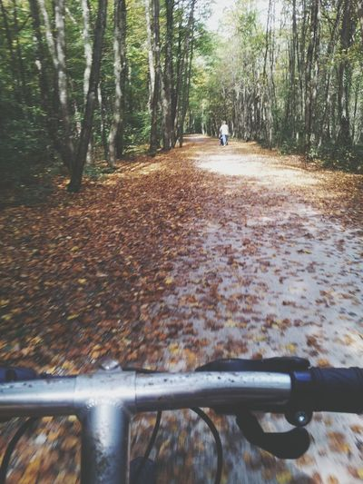 with a Bycicle through the Forest Tessin And I