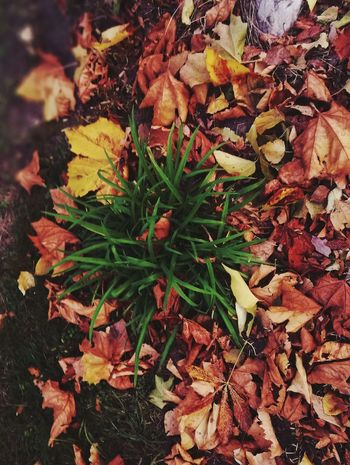 The colors of autumn Leaf Nature Autumn Outdoors Plant Growth Day Green Color Change No People Beauty In Nature Close-up Fragility