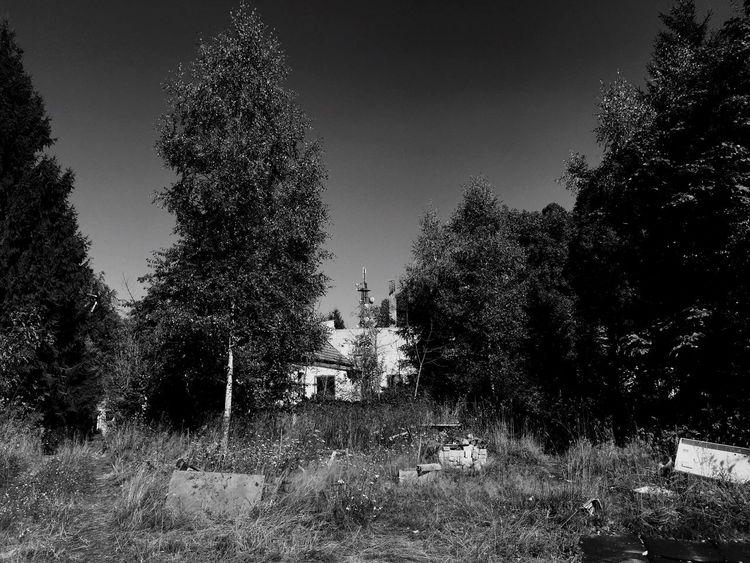 Black & White Lost Place Built Structure Tree Nature Damaged Viktorshöhe
