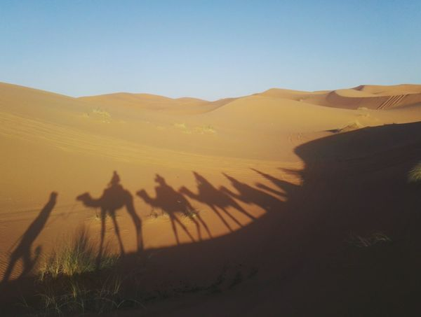 Outdoors Desert Desertlife Shadow Camel Sahara Desert Sahara Adventure Happiness Marrocco