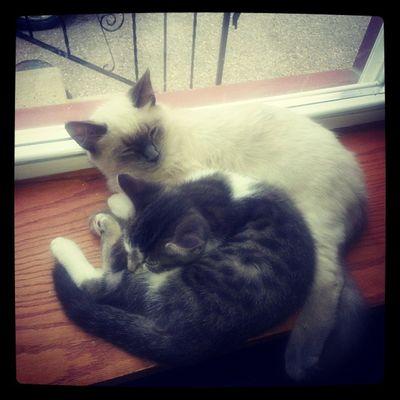 Bestfriends KittyCats Socute Lazydays