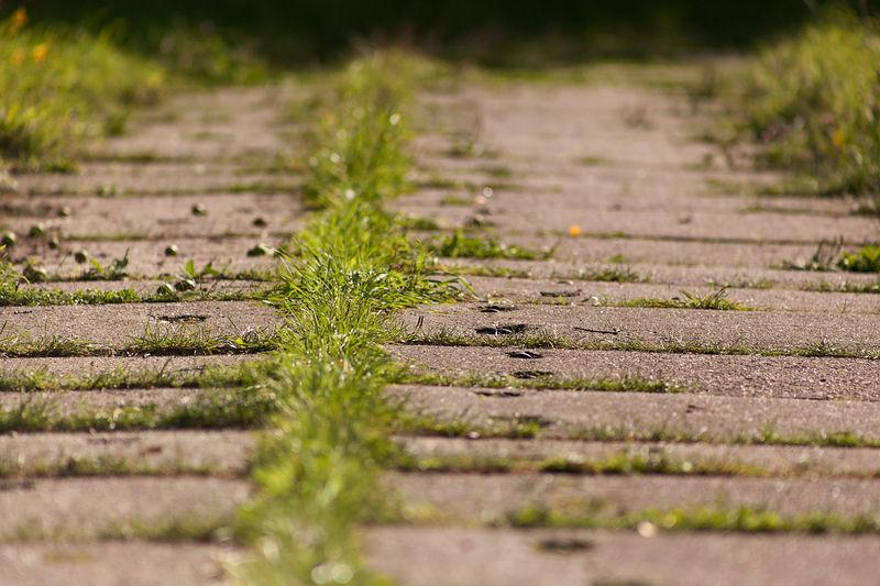 Grass overgrown boardwalk
