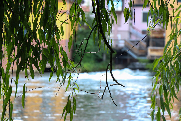 Focus on leafs in front of a canal Plant Water Growth Focus On Foreground Nature Plant Part Leaf Day Green Color Lake Tree No People Beauty In Nature Reflection Outdoors Waterfront Branch Tranquility Architecture River City Colorful Colors Canal