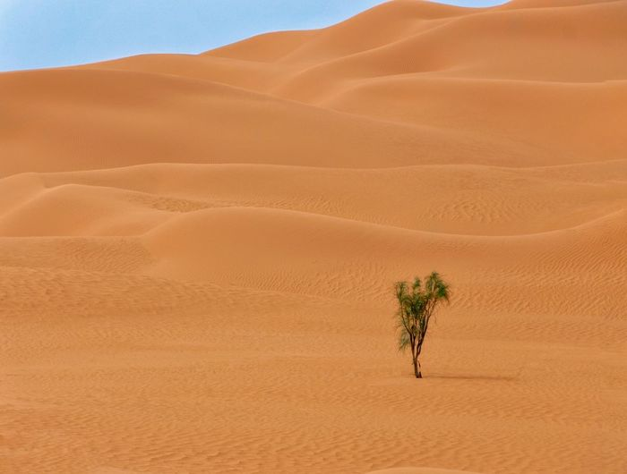 North africa desert