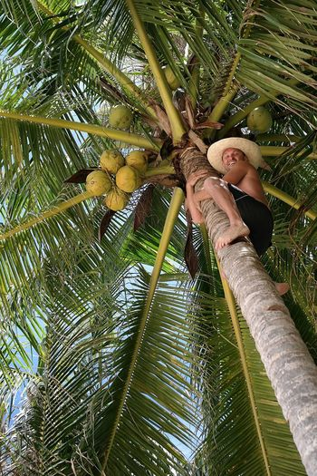 One Person Tropical Paradise Nature Coconut Palm Tree Climbing Climbing Trees Tropical Climate Lifestyle Travel Traveling Young Adult Coconut Trees Coconuts Smiling Laughter Guy Palm Tree Palm Trees Philippines Tropical Hat Nature Enjoying Life Smile Perspectives On People Be. Ready. Food Stories An Eye For Travel Go Higher Summer Exploratorium The Traveler - 2018 EyeEm Awards A New Beginning A New Perspective On Life