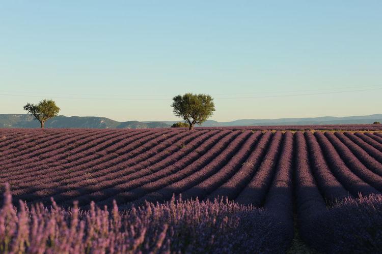 A sunrise near valensole