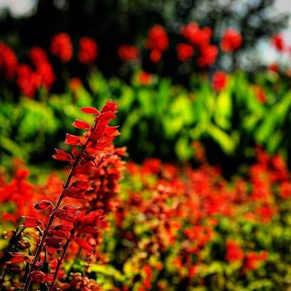 🌼☀Flowers Summer Park Nature влксм цветы парк лето