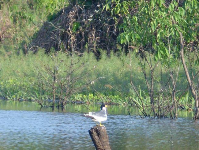 Itacoatiara Amazonas