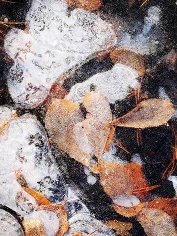 Full Frame Winter Frozen Structure Ice Frozen Frozen Nature Frozen Leaves In The Ice, Abstract Patterns In The Ice