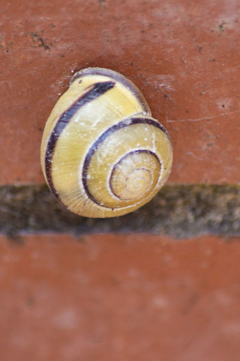 Animal Animal Body Part Animal Shell Animal Themes Animal Wildlife Animals In The Wild Close-up Day Gastropod High Angle View Invertebrate Land Mollusk Nature No People One Animal Outdoors Shell Snail Spiral