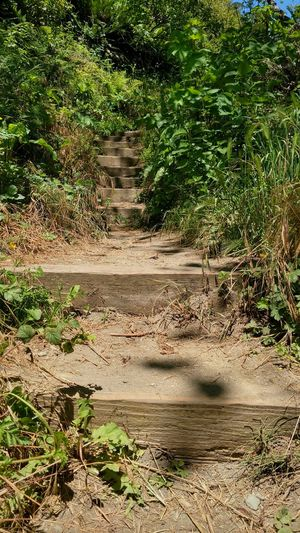 and up we go Stairs Stairs In Nature Stairs_collection Going Up Nature_collection EyeEm Best Shots Eyeem Travel California Humboldt County Explore EyeEm Nature Lover Lobuephotos Motorola Wanderlust EyeEm Selects Tree Shadow Sunlight Grass
