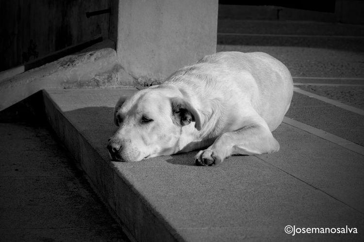 Perros De La Calle Homeless Dogs