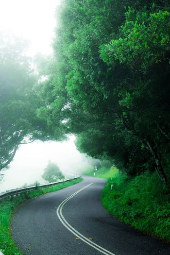 Far From You Street No People Tree Nature Curve Beauty In Nature