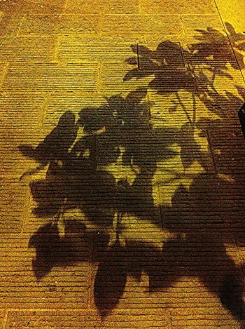 Showcase: January Leaves in my dreams . Popular Photos Popular Popular Photo Leaves Autumn Leaves Autumn Shadow Light And Shadow Autumn Colors