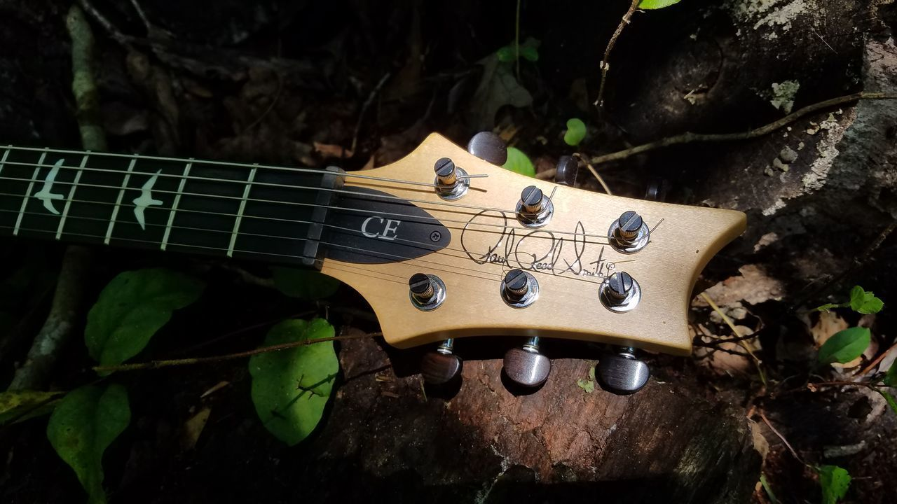 CLOSE-UP OF A GUITAR ON PLANT