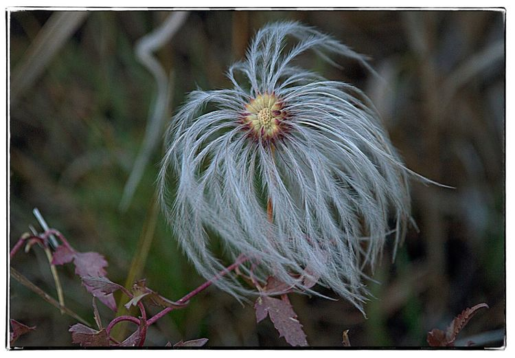 Fuzzy flower in