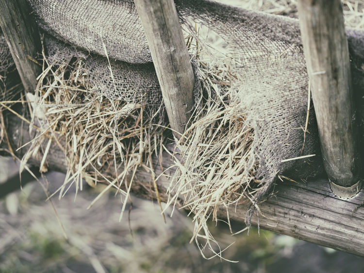 EyeEm Gallery Cart Close-up Day Eye4photography  Hay Old Wood Outdoors Sackcloth Wood - Material Wooden Texture