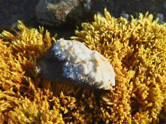 Salt Naturalsolt Geothermal  Iceland Iceland_collection Kristal Nature