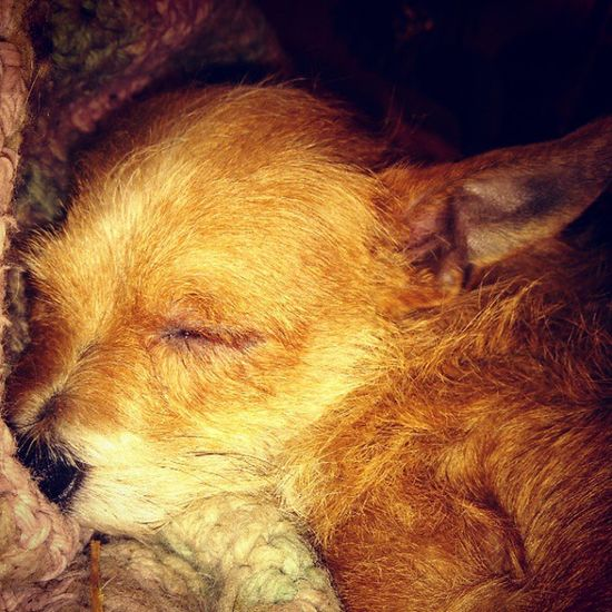 I think I'm going to take snickers cue.. Snickers Cute Sleeptime Sleep Puppy Family LovinLife