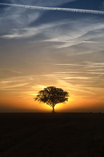 Silhouette tree on landscape at sunset